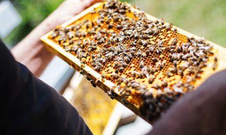La cooperativa apícola Pampero es un caso exitoso de asociativismo a nivel mundial