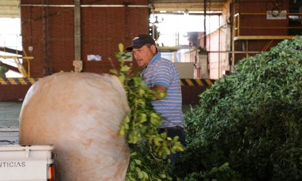Video institucional sobre los productores de Yerba Mate de Santo Pipó