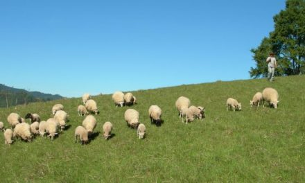 Cooperativistas de Córdoba exportan lana a Uruguay