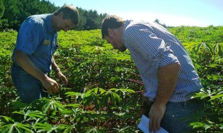 Misiones: buscan mejorar la productividad de las cooperativas mandioqueras