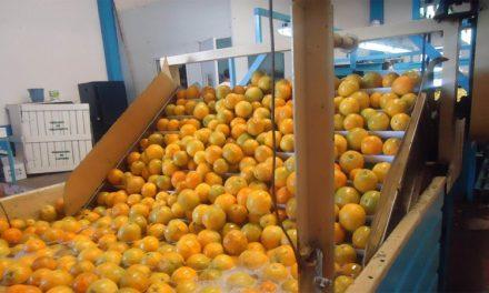 Entre Ríos: agricultores cooperativistas de frutas cítricas producen jugos que abastecen a industrias nacionales
