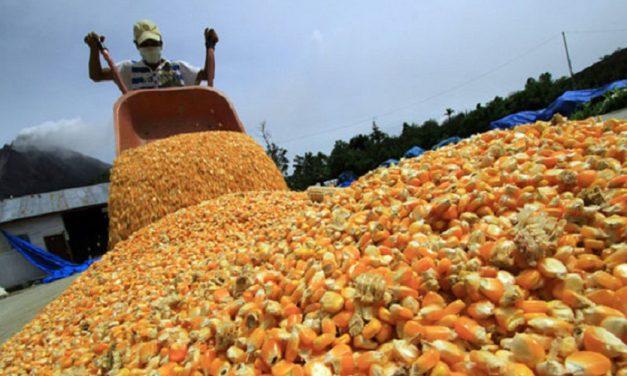Misiones: productores buscan aumentar su producción de balanceados
